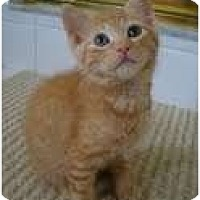 Adopt A Pet :: Layla - Coral Springs, FL