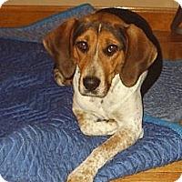 Adopt A Pet :: Scarlett - cedar grove, IN