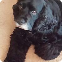 Adopt A Pet :: Magnum - Knoxville, TN