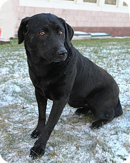 Labrador Retriever Mix Dog for adoption in Oakland, New Jersey - Sylvia
