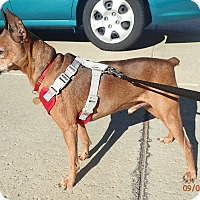 Adopt A Pet :: CHARLIE BROWN - Sacramento, CA