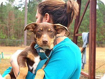 Terrier (Unknown Type, Medium) Mix Dog for adoption in Oakdale, Louisiana - Lexi