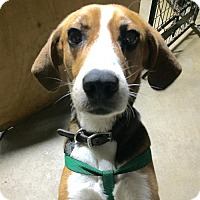 Adopt A Pet :: Toby Man of Cumberland - Spartanburg, SC
