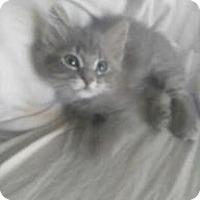 Adopt A Pet :: Mack - Parlier, CA