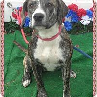 Adopt A Pet :: DOT SEE ALSO STELLA - Marietta, GA