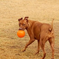 Adopt A Pet :: FRANCESCA - Chandler, AZ