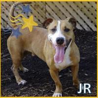 Adopt A Pet :: JR - Cincinnati, OH