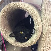 Adopt A Pet :: Sid - Plainville, MA