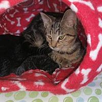 Adopt A Pet :: Fai - Grand Ledge, MI