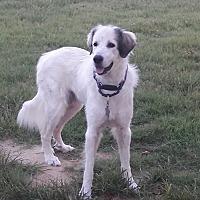Adopt A Pet :: Jessie Green - Kyle, TX