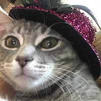 Adopt A Pet :: Mimi - Toronto, ON
