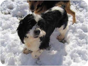 Cocker Spaniel Dog for adoption in Mahwah, New Jersey - Jack