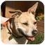 Photo 1 - American Pit Bull Terrier Mix Dog for adoption in Berkeley, California - Terri Ann