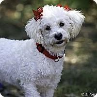 Adopt A Pet :: Bonita - Calgary, AB