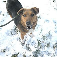 Adopt A Pet :: #555-13 RESCUED! - Zanesville, OH