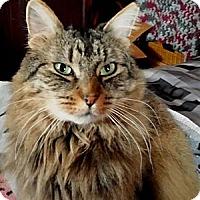 Adopt A Pet :: Molly - Little Falls, NJ