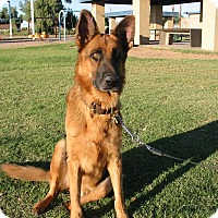 Adopt A Pet :: Conrad Von Altenberg - Phoenix, AZ