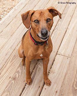 Mixed Breed (Medium) Mix Dog for adoption in Richmond, Virginia - Homer