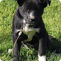 Adopt A Pet :: Ellie Mae - Staunton, VA