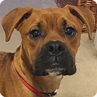 Adopt A Pet :: Bane - Orlando, FL