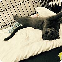 Adopt A Pet :: Alphonse - Speonk, NY