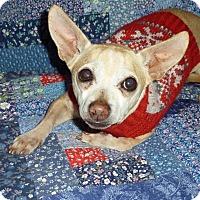 Adopt A Pet :: Joe - 8 lbs! - Los Angeles, CA