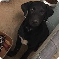 Adopt A Pet :: Joy - Pompton Lakes, NJ