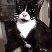Adopt A Pet :: Lovey - Tampa, FL