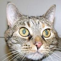 Adopt A Pet :: Sydney - Kalamazoo, MI
