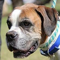 Adopt A Pet :: Conway - Phoenix, AZ