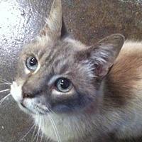 Adopt A Pet :: Liam (wg) - Oviedo, FL