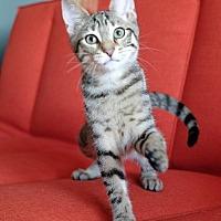 Adopt A Pet :: Warren - Brooklyn, NY