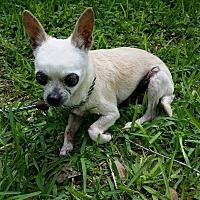 Adopt A Pet :: William - San Antonio, TX