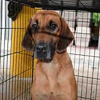 Adopt A Pet :: Sally - Newnan City, GA