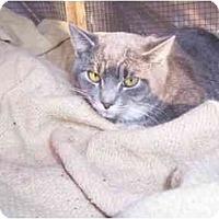 Adopt A Pet :: Chloe - Winnsboro, SC