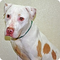 Adopt A Pet :: Ernie - Port Washington, NY
