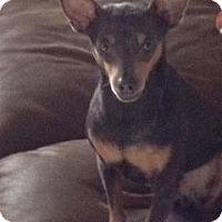 Adopt A Pet :: JJ - Seattle, WA