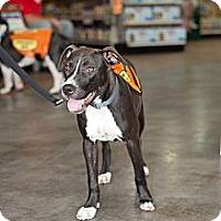 Adopt A Pet :: Abby - Lake Worth, FL
