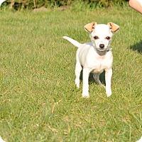 Adopt A Pet :: Richie - Tumwater, WA