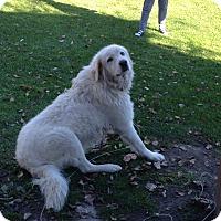 Adopt A Pet :: Rocky(URGENT) - Northumberland, ON