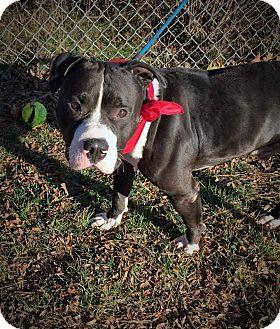 Terrier (Unknown Type, Medium) Mix Dog for adoption in Flint, Michigan - Dodger  #5196