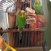 Adopt A Pet :: Sadie & Luna - St. Louis, MO