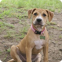 Adopt A Pet :: Madison - Framingham, MA