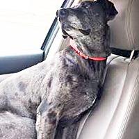Adopt A Pet :: Giacomo - San Diego, CA