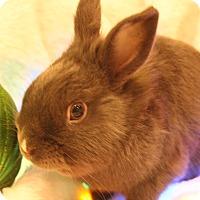 Adopt A Pet :: Tigger - Hillside, NJ