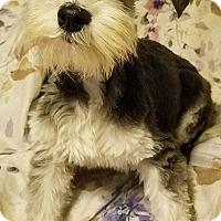 Adopt A Pet :: Dancer - Detroit, MI