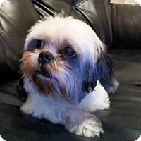 Adopt A Pet :: Oreo - Oviedo, FL