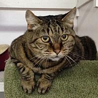 Adopt A Pet :: Mona - San Carlos, CA