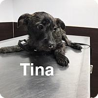 Adopt A Pet :: Tina - Parsippany, NJ