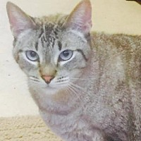 Adopt A Pet :: Berkley - Freeport, FL